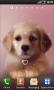 Скачать Puppy Lite