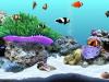 Скачать DigiFish Clownfish