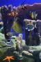Скачать Pet Fish Tank