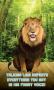 Скачать Talking Lion