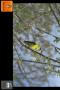 Скачать Singing Bird