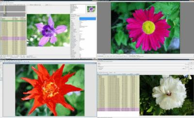 WildBit Viewer Portable 6.3