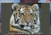 Скачать Keyboard Image Viewer