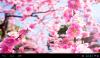 Скачать Весеннее цветение