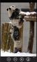 Скачать Милые панды бесплатно