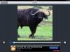 Скачать Animal Sounds HD Lite