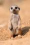 Скачать Cute Baby Animals Pictures