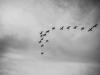 Скачать Птицы