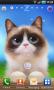 Скачать Shui The Kitten