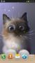 Скачать Peper Kitten