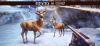 Скачать Deer Hunter 2018