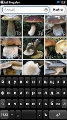 Энциклопедия грибов 1.2