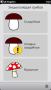 Скачать Энциклопедия грибов