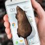 Скачать Мышь на экране Страшная Шутка