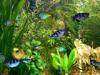 Скачать Aqua 3D Screensaver 1.51