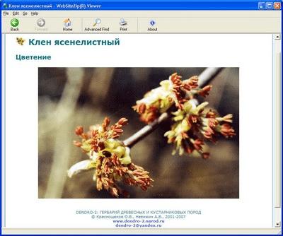 DENDRO-2: Гербарий древесных и кустарниковых пород 2008