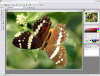 Скачать Altarsoft Photo Editor