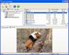 Скачать Easy NTFS File Undelete