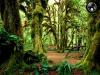 Скачать Тропический Лес