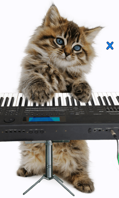 Говорящая кошка. Танцует! 2.480.0.47