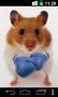 Скачать Funny Hamster Cracked Screen