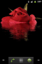 Скачать Rose Reflected In Water