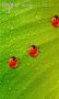Скачать Bug Tracker