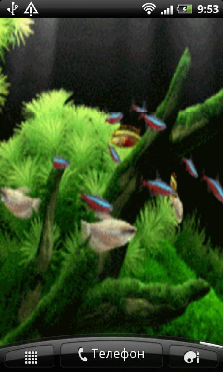 Обои Аквариум, рыбка. Животные foto 2