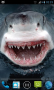 Скачать Magic Touch: Shark Attack