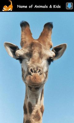 Изучаем Звуки Животных 1.0.0.23